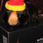 Loot Crate – listopad 2014